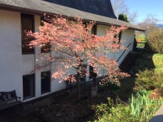 memorial garden tree from above