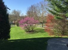 yard from barton