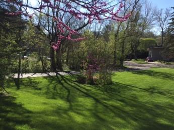 yard in spring